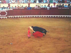 Bullfight (Andalusia, Spain)