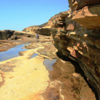 The Rocky Intertidal Zone in Cabrillo National Monument
