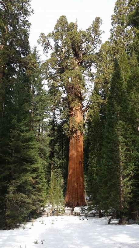 THE Largest Tree on Earth - Sequoia National Monument