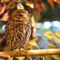 Double Post: Owl and Flower Pics